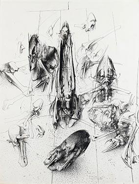 Obitelji Agelenidae