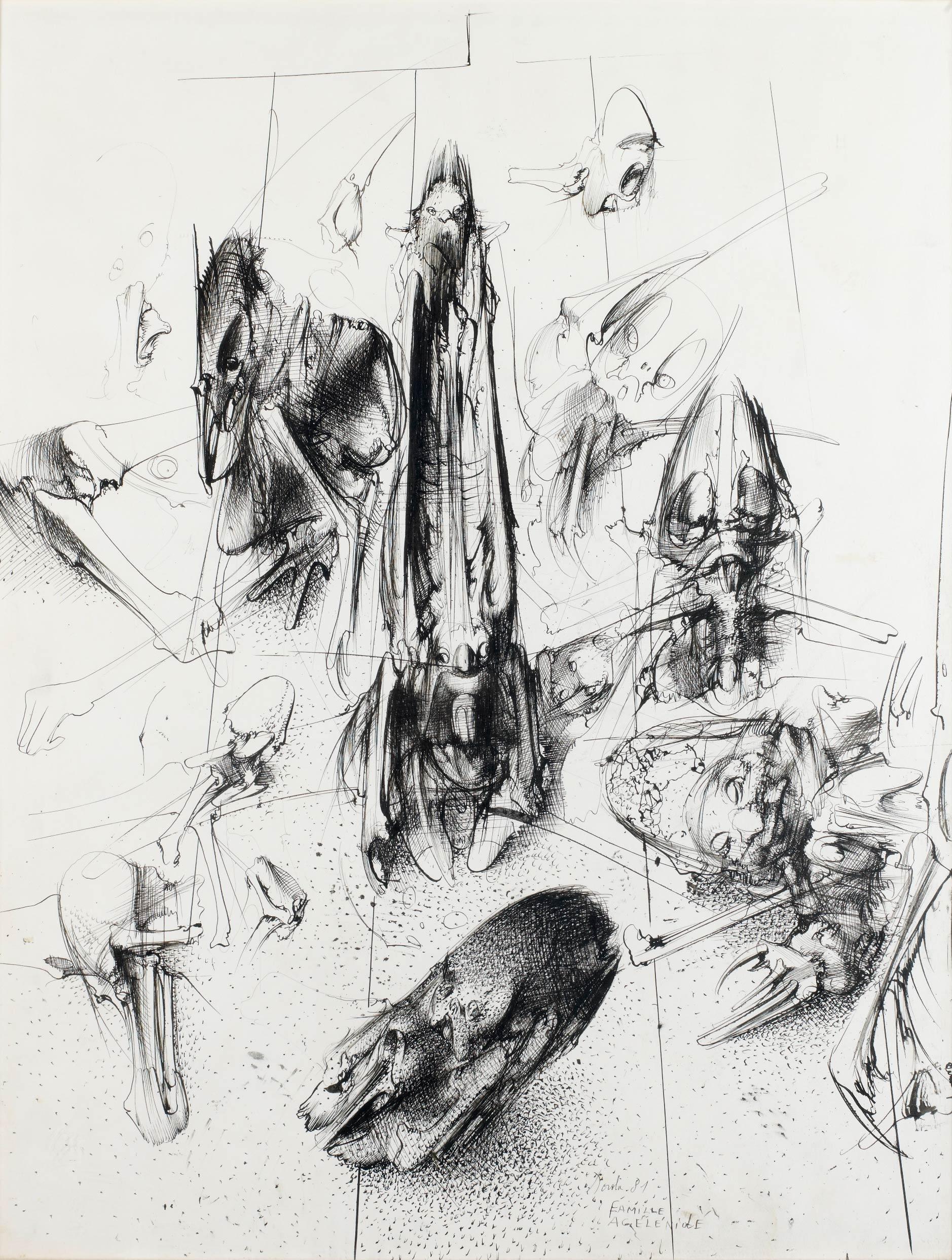 Agelenidae family, 1981