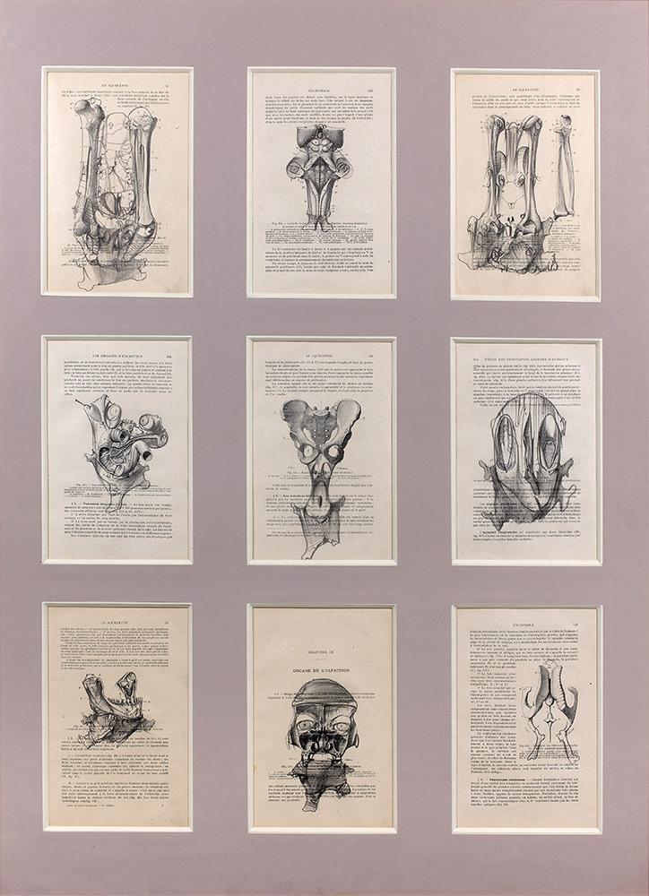 Human Anatomy, 1989