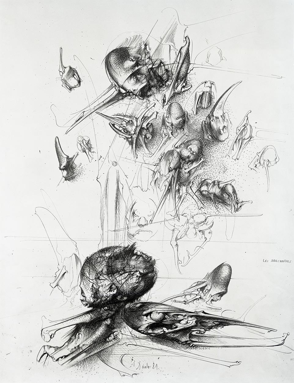 Paučnjaci, 1981