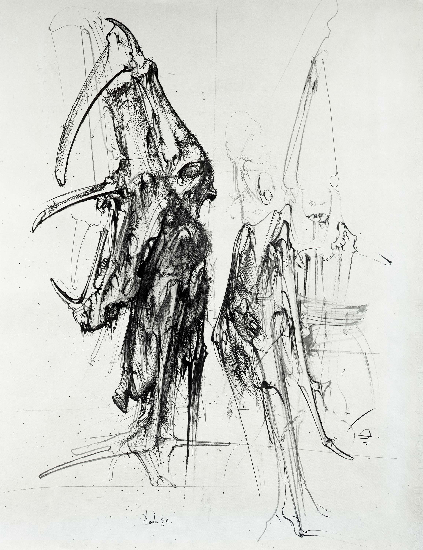 Kolumbijski tvrdokrilci, 1981