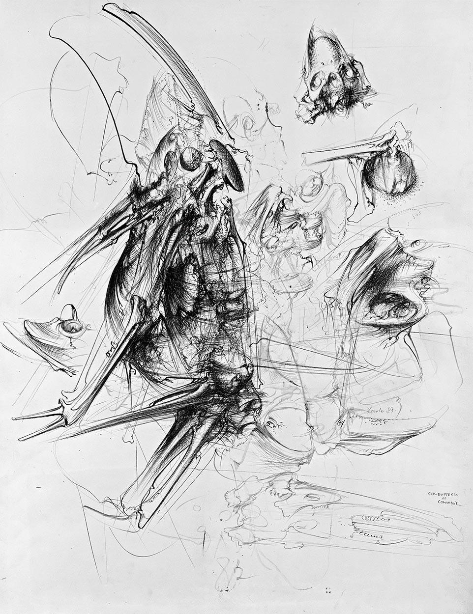 Kolumbijski tvrdokrilci, 1982