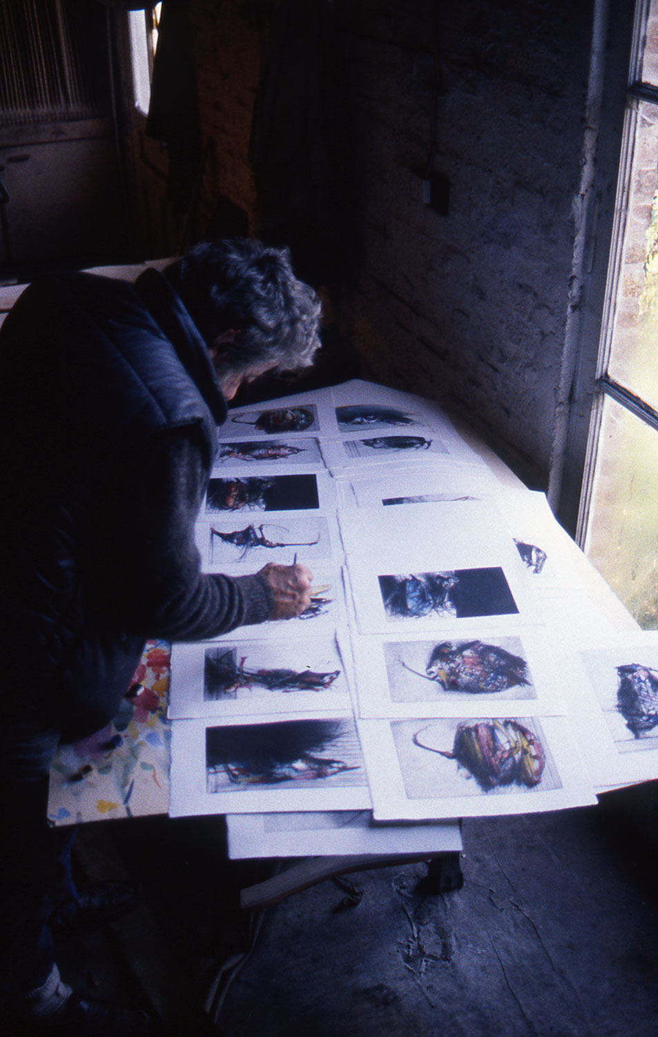 Dado in 1986 embellishing engravings from the Buffon series with gouache