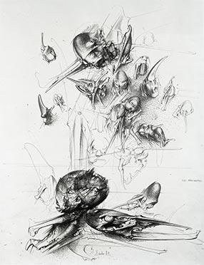Paučnjaci