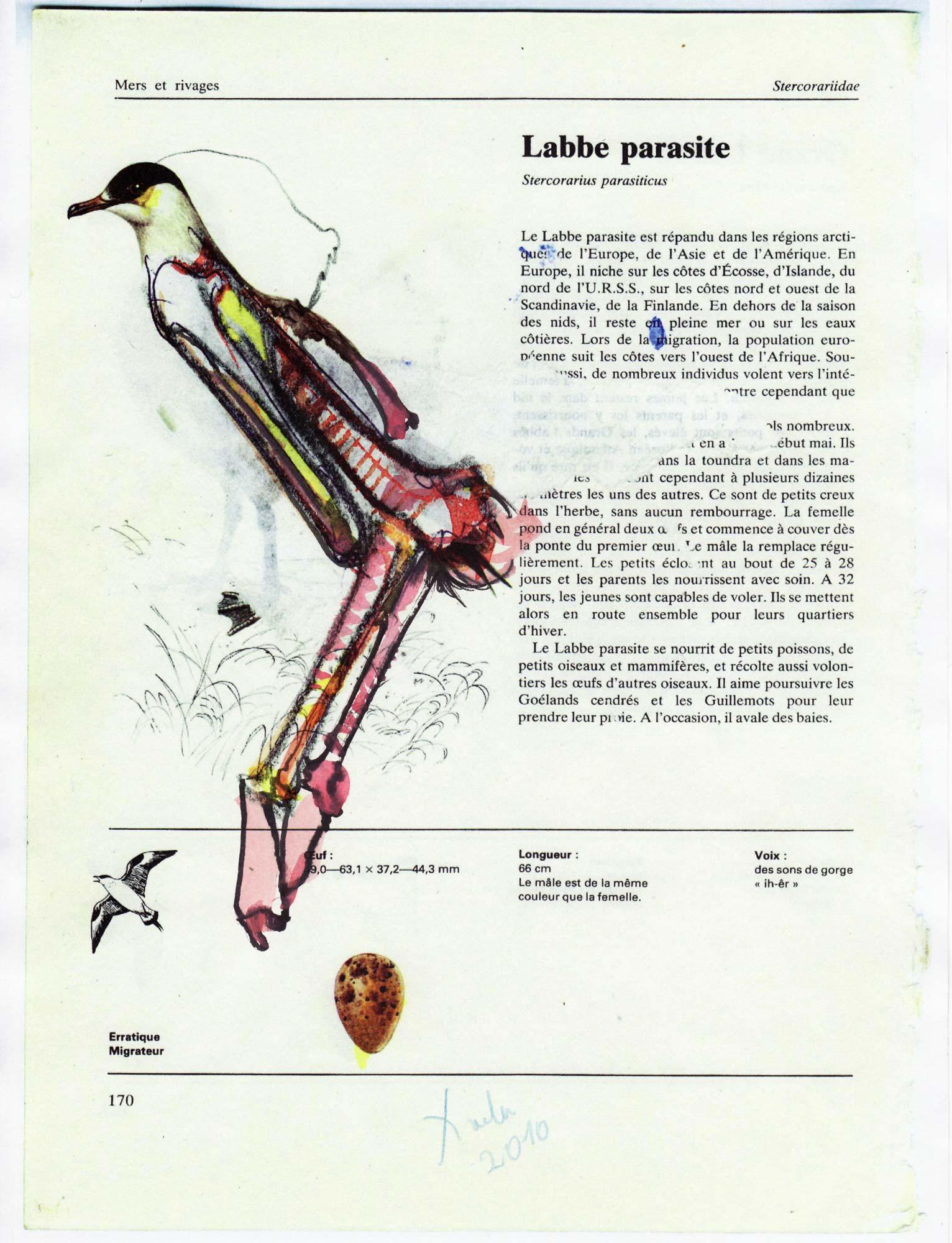 Bird of Auschwitz