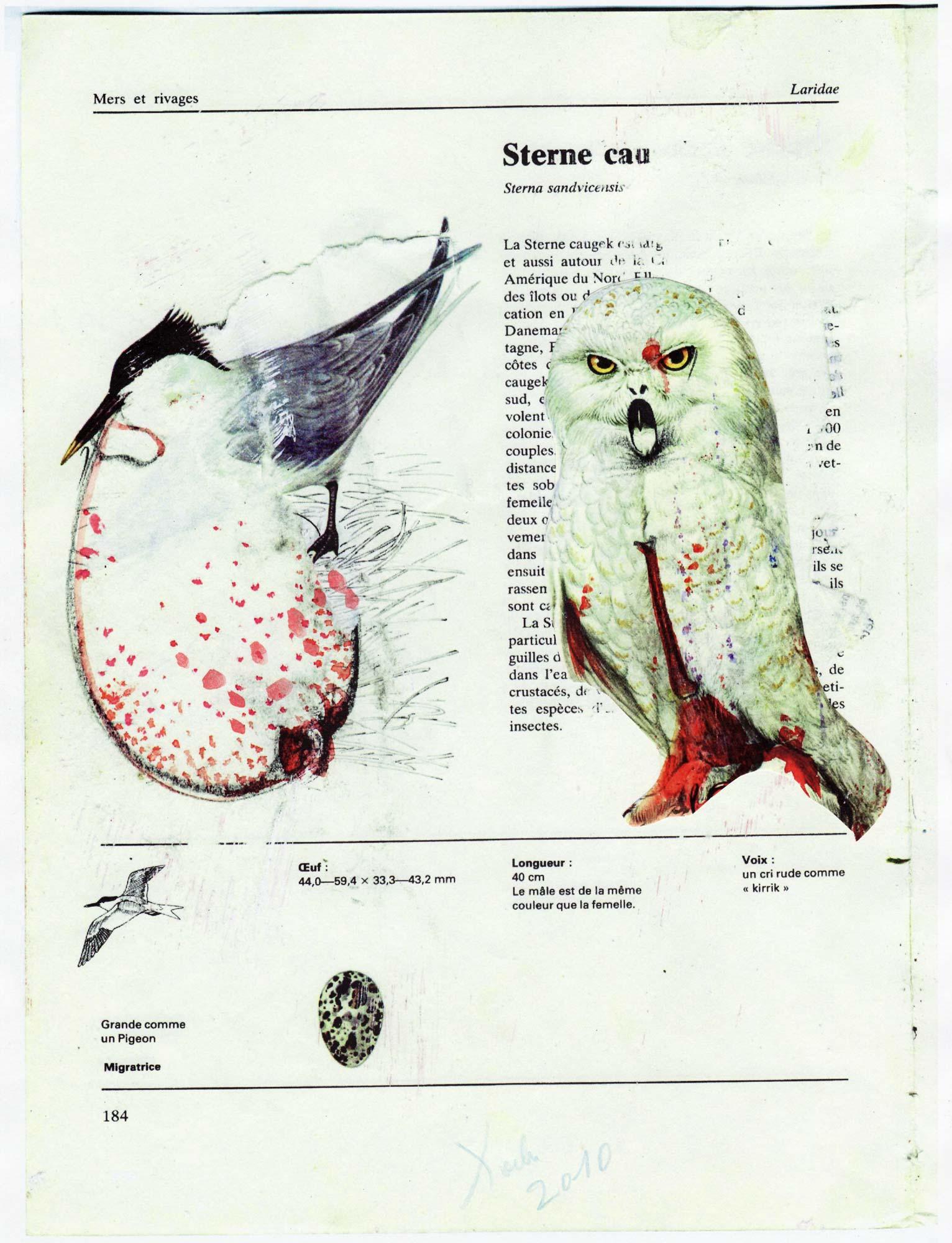 Ptica iz Aušvica